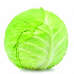 Cabbage (ବନ୍ଧା କୁବି)